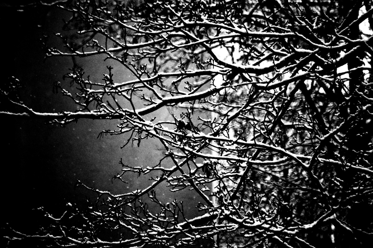 © Branches & snow Berlin 2009