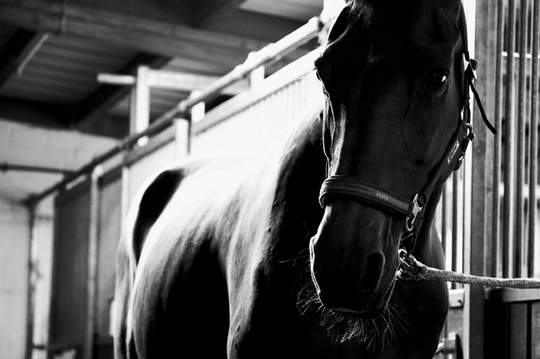 © Horse near Langenselbold 2009 by Fritsch