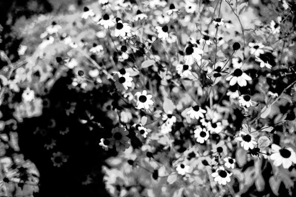 © Garten, Potsdam, 2013, Florian Fritsch