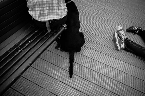 © Hund, Zingst, 2013, Florian Fritsch
